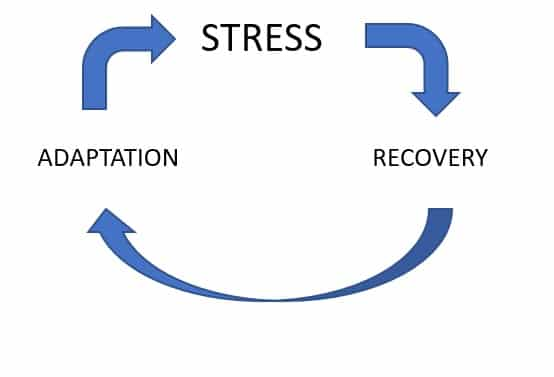 Stress recovery adaptation cycle